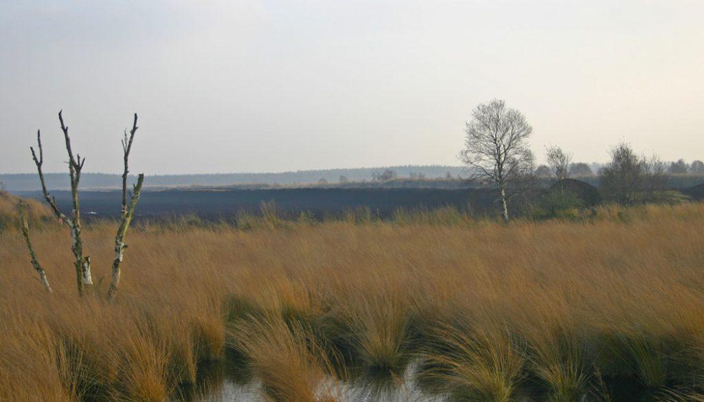 FrisiaOrientalis-BerumerfehnerMoor